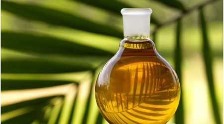 palmolie palm oil all about