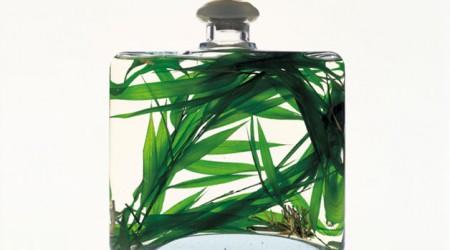 perfume-plant-628x363-TS-76804094