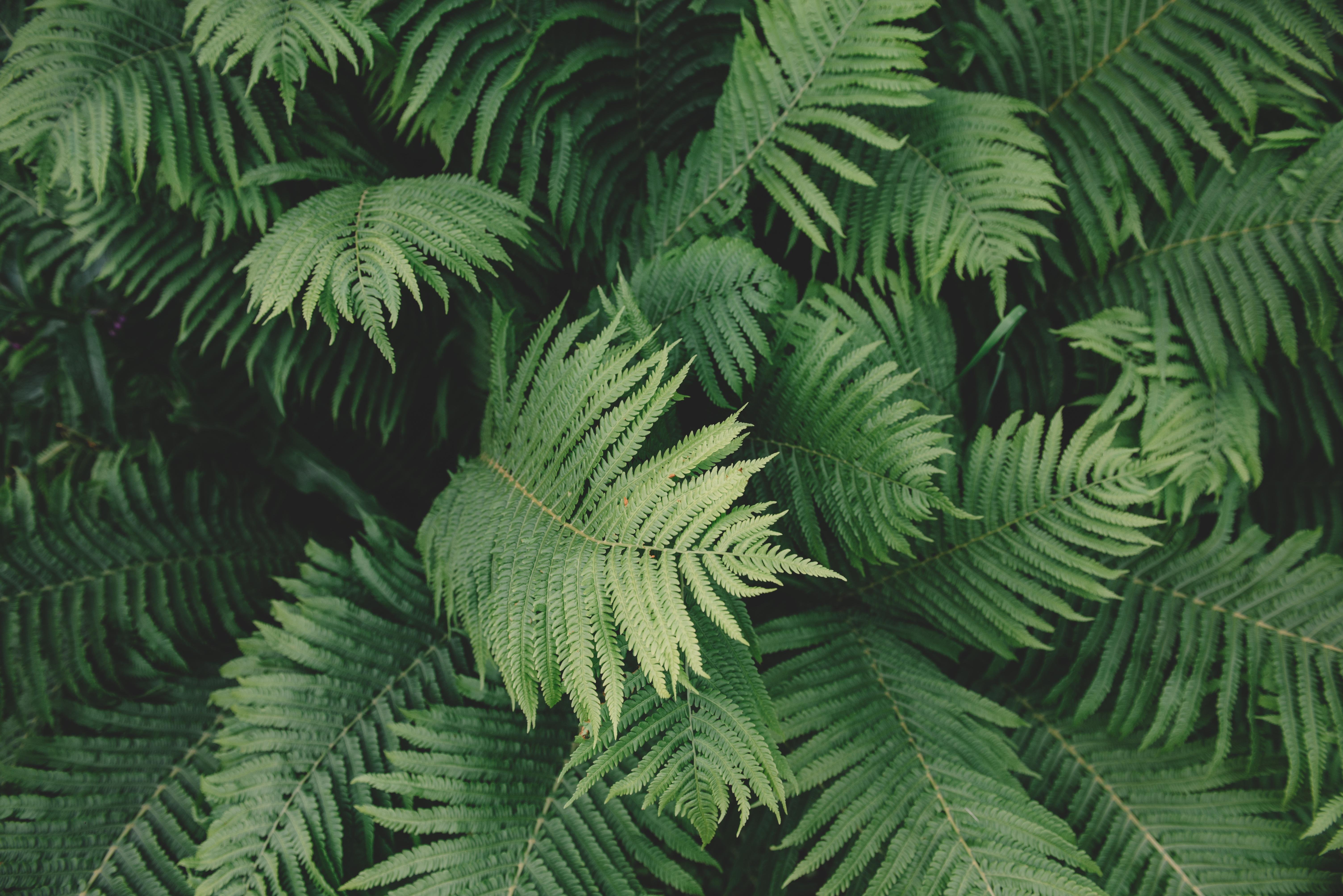 groen leven