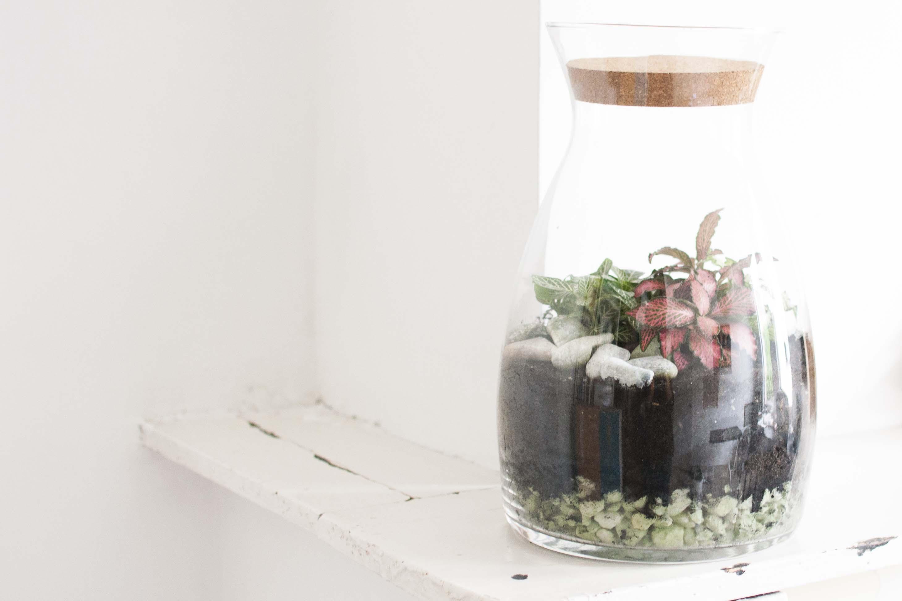 DIY closed terrarium eco system
