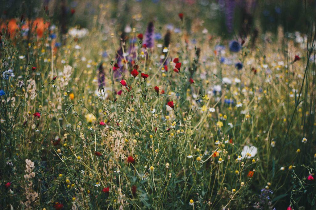 tuininspiratie wilde tuin bijen bloemen