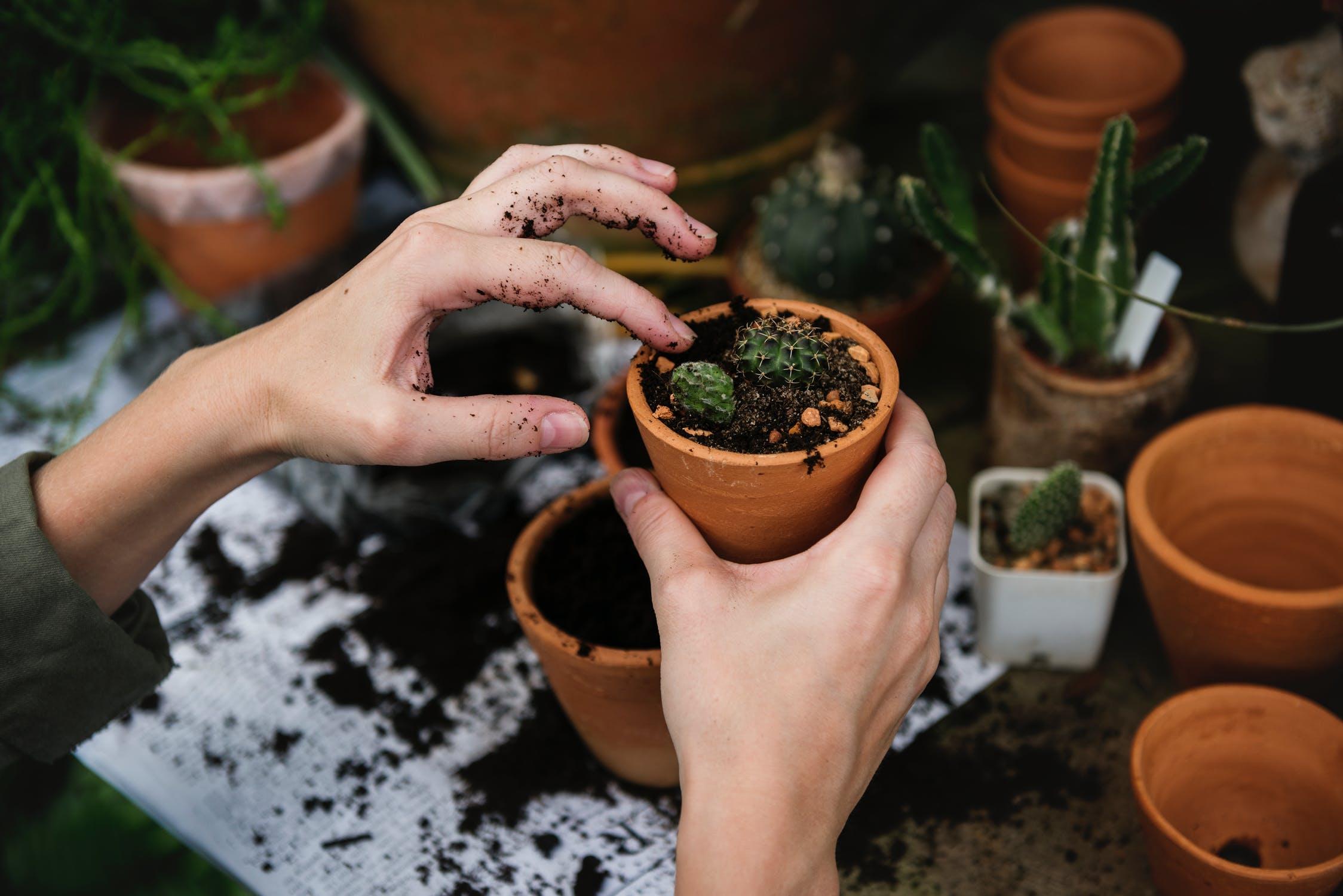 planten ruilen stekjes duurzaam
